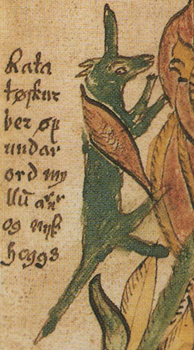 A 17th-century Icelandic manuscript depicting Ratatoskr. Although unexplained in the manuscript and not otherwise attested, in this image Ratatoskr bears a horn or tusk.