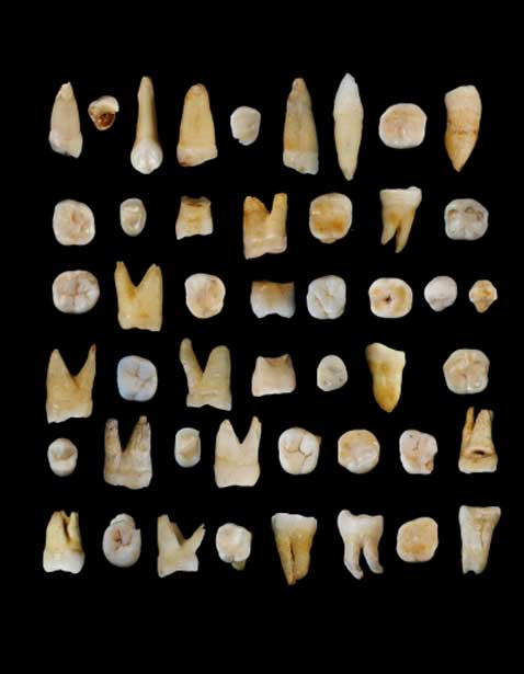 47 teeth found in Fuyan cave in Daoxian province in Southern-China.
