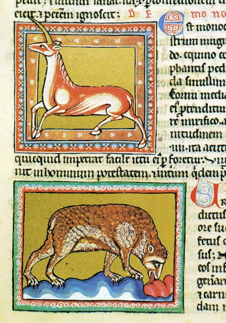 A monoceros (unicorn) above and bear below. The bear was said to give birth to formless, fleshy young, which it would then shape into small bears with the licking of its tongue. Ashmole Bestiary, c. early 13th century.