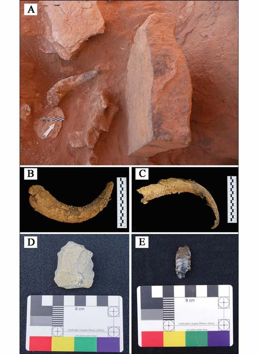 Artifacts recovered during excavation and ground survey: A) cattle horn positioned in front of a betyl; B–C) cattle horns; D) Neolithic micro core; E) Neolithic bifacial foliate. (© AAKSA and Royal Commission for AlUla/Antiquity Publications Ltd)