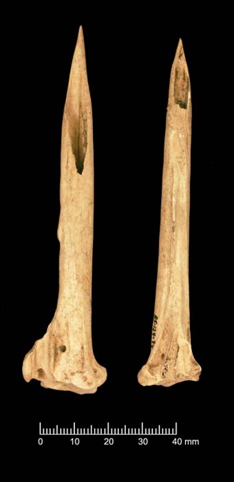Bone tools in the Fernvale bundle. (Aaron Deter-Wolf and Tanya M. Peres)