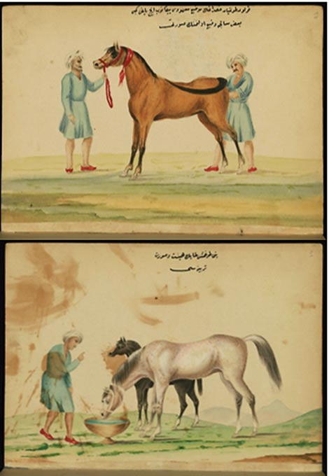 This is an illustrated Ottoman copy of a Turkish work on the training and care of warhorses by Aḥmed ʿAṭā Ṭayyārzāde.