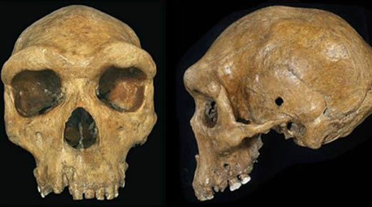 Broken Hill/Kabwe skull with bullet like holes