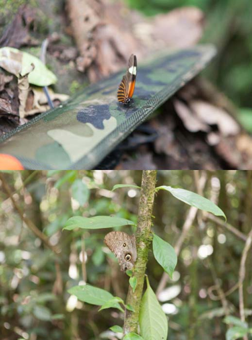 Butterflies: Examples of two of the more benign creatures we encountered on our expedition.