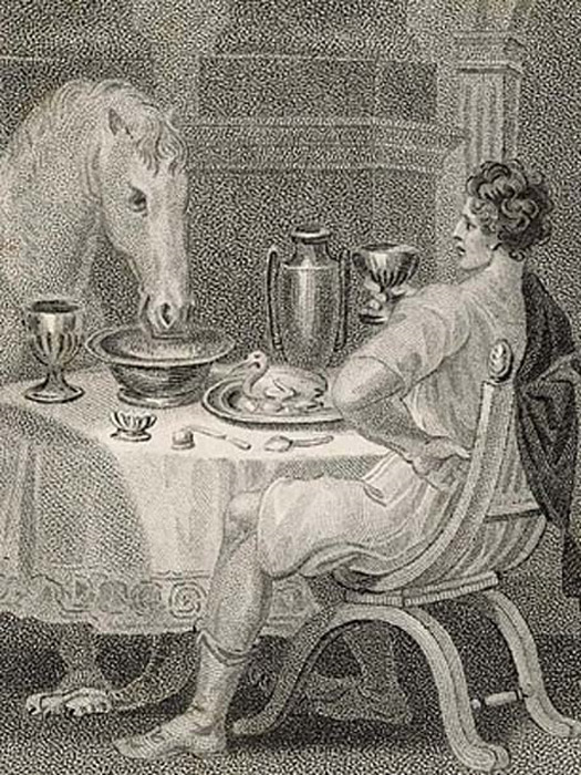 Caligula and his horse.