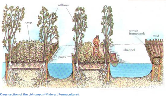 Cross section of the Chinampas