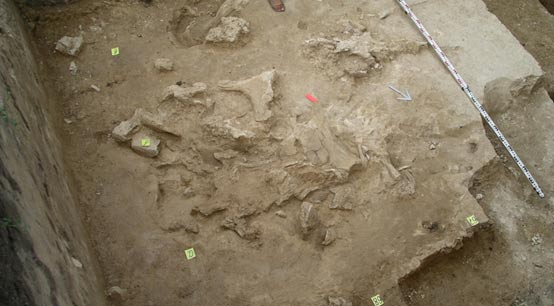 Concentration of bones found at Kostenki