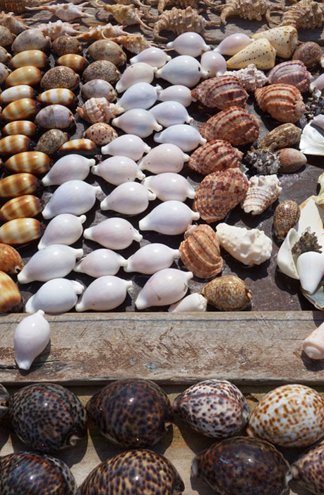 Cowrie shells, to be used as shell money, are collected and laid out to dry. (eqroy / Adobe)