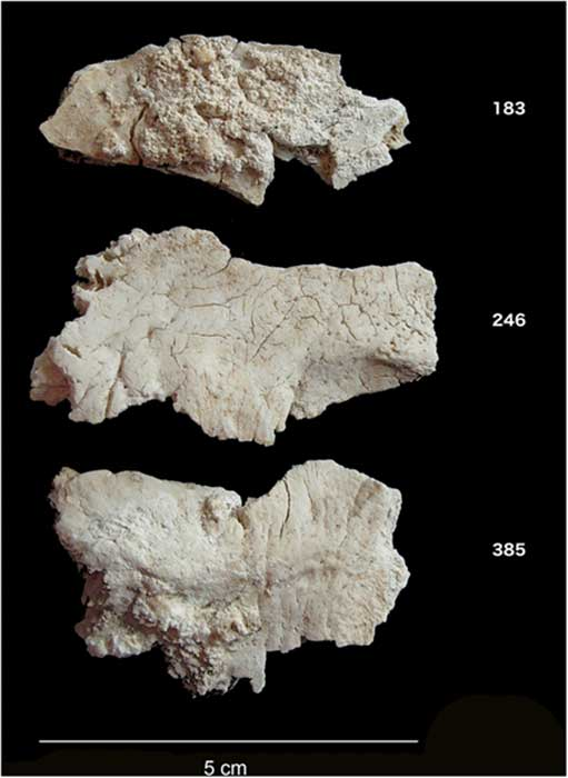 Cremated occipital bone fragments from Stonehenge. (Image: Christie Willis, UCL)
