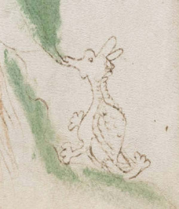 "Detail from Voynich Manuscript, page 50; Folio 25v ""dragon"" as the detail is agreed to most resemble a classic mythological dragon. (Public Domain)"