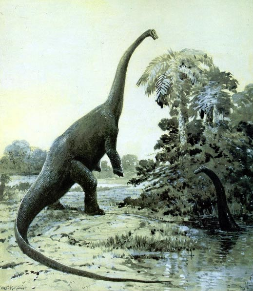 Diplodocus rearing in a painting by Charles Knight.