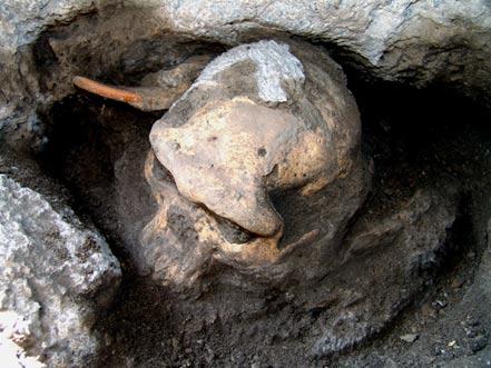 The Dmanisi early Homo cranium
