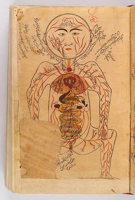 Drawing of viscera etc., Avicenna, Canon of Medicine. (Wellcome Images/CC BY 4.0)