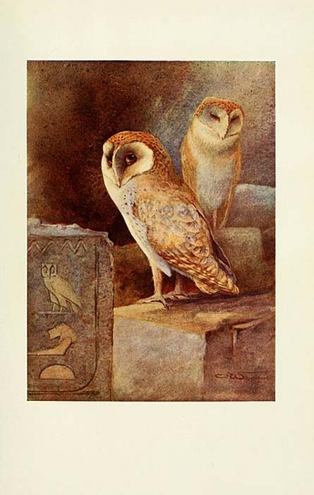 Egyptian birds for the most part seen in the Nile Valley, Screech Owl (1909) (Public Domain)