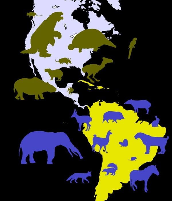 Examples of migrant species in the Americas after the formation of the Isthmus of Panama. Olive green silhouettes denote North American species with South American ancestors; blue silhouettes denote South American species of North American origin. (CC BY-SA 1.0)