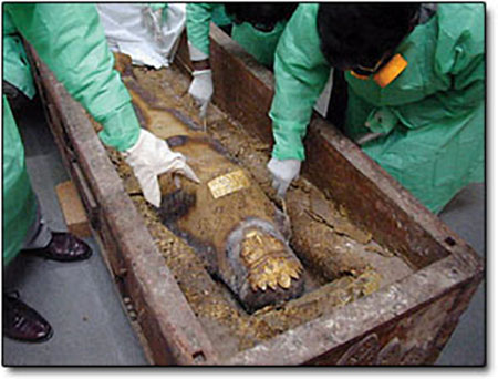 Experts examine the coffin and mummified body (Source: Sciencemag)