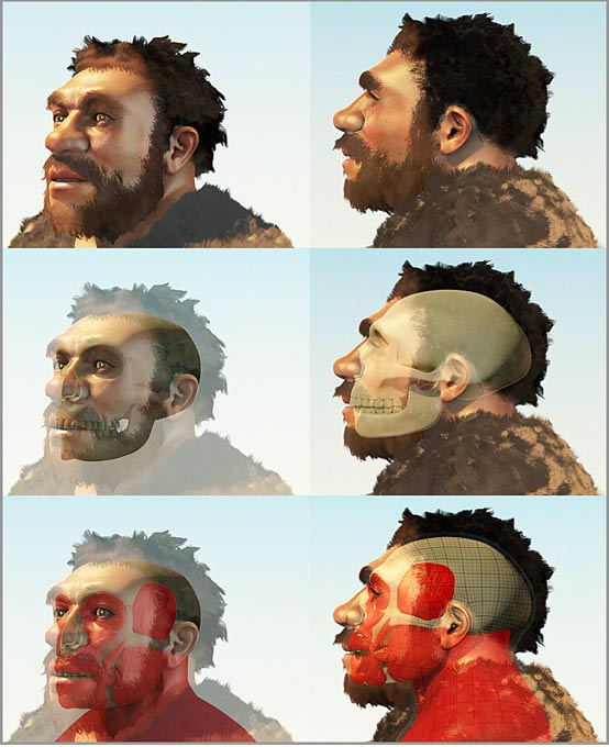 Forensic reconstruction of a Homo Neanderthalensis skull by Cicero Moraes