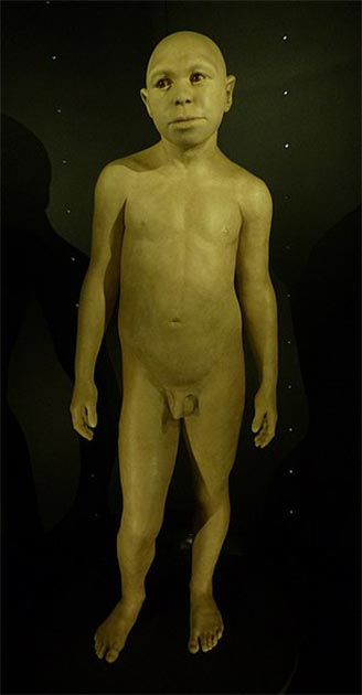 Forensic reconstruction of a juvenile Homo antecessor by Élisabeth Daynès (2014), Museo de la Evolución Humana, Burgos, Spain. (CC BY SA 4.0) Note his facial features.