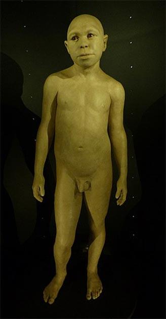 Forensic reconstruction of a juvenile Homo antecessor by Élisabeth Daynès (2014), Museo de la Evolución Humana, Burgos, Spain. (CC BY SA 4.0) Note his facial features.