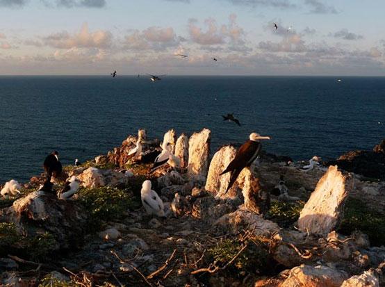 Heiau at Mokumanamana (Necker Island)