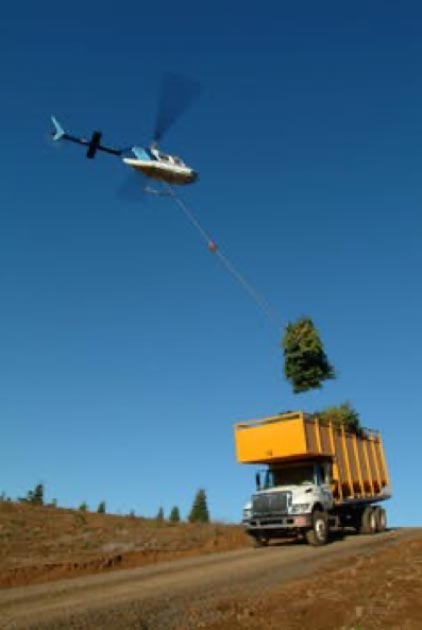 Helicopter hoisting of firs in transport trucks in Oregon. Noble Mountain Tree Farm