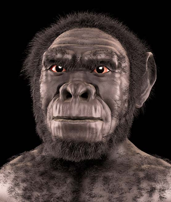 Homo habilis - Forensic facial reconstruction/approximation.