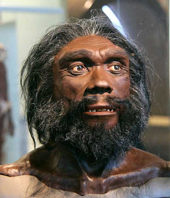 Model of the head and shoulders of an adult male Homo heidelbergensis on display in the Hall of Human Origins in the Smithsonian Museum of Natural History in Washington, D.C.