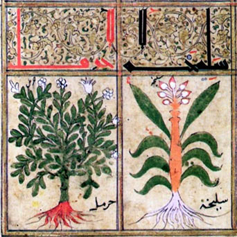 Illustrations from an Arab manuscript