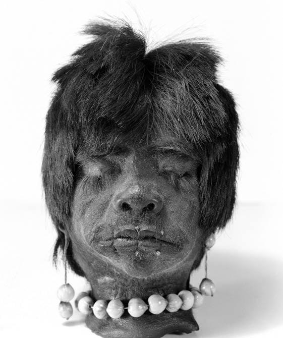 A shrunken head, Jivaro Indian, Ecuador, S.America Wellcome Images