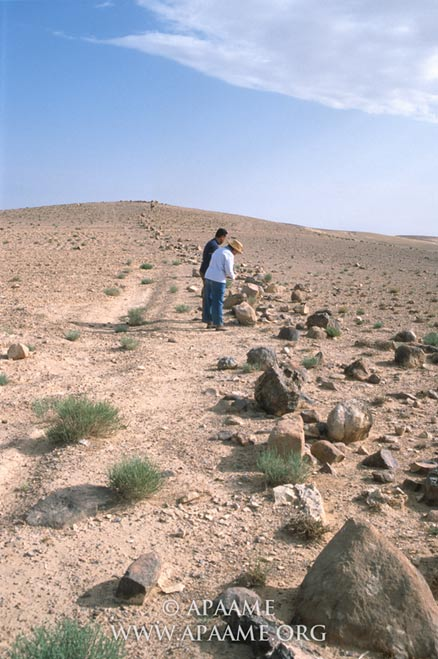 A close-up of the Khatt Shebib wall showing the lose boulders that were once stacked on top of each other to form a 1 to 1.5 meter-high wall.