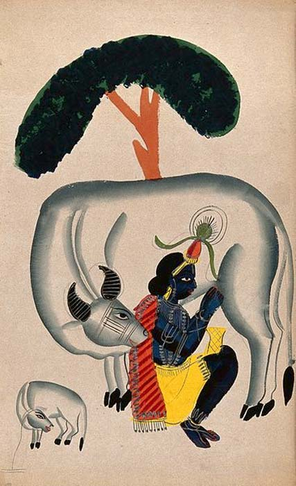 Krishna milking a cow while the calf looks.