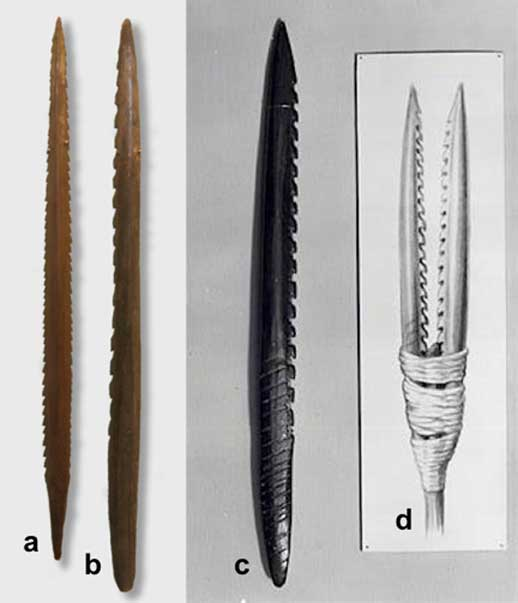 Kunda culture harpoons (a & b, credit: Wiki Commons) and the Leman and Ower Bank harpoon (c) found on the site of Doggerland in 1931 (public domain). To its right (d) is a stylized reconstruction (public domain) of how the harpoon might have been used.