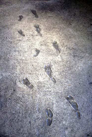 Laetoli footprints.