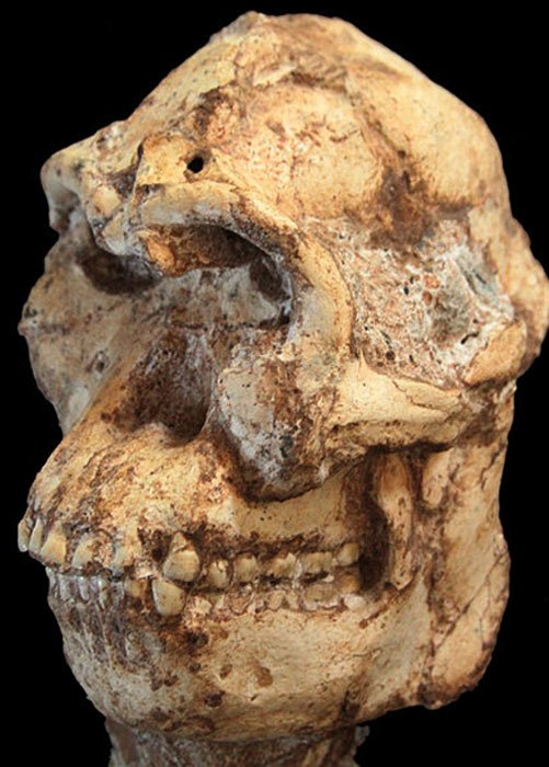 Little Foot skull. (Wits University / CC BY-SA 4.0)