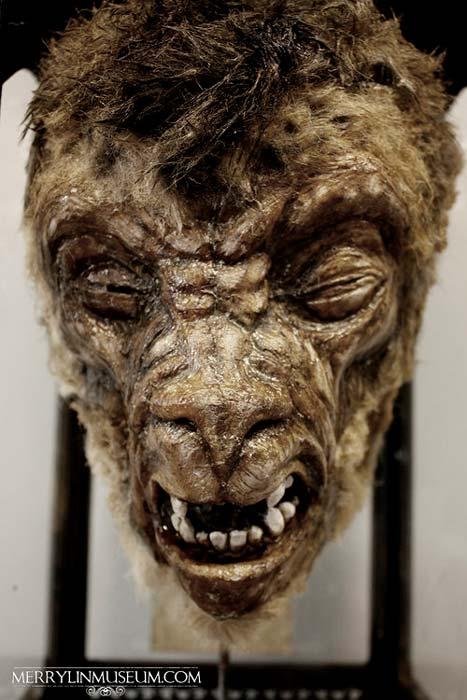 Lycanthrope specimen at the Merrylin Cryptid Museum.