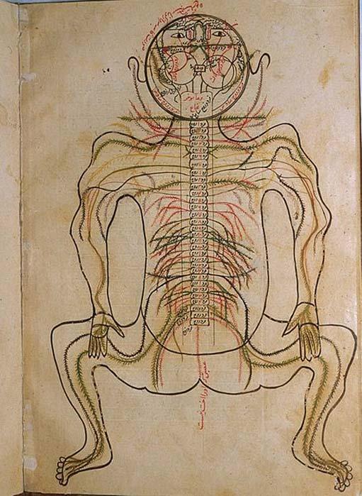 Mansur ibn Ilyas: Anatomy of the human body.