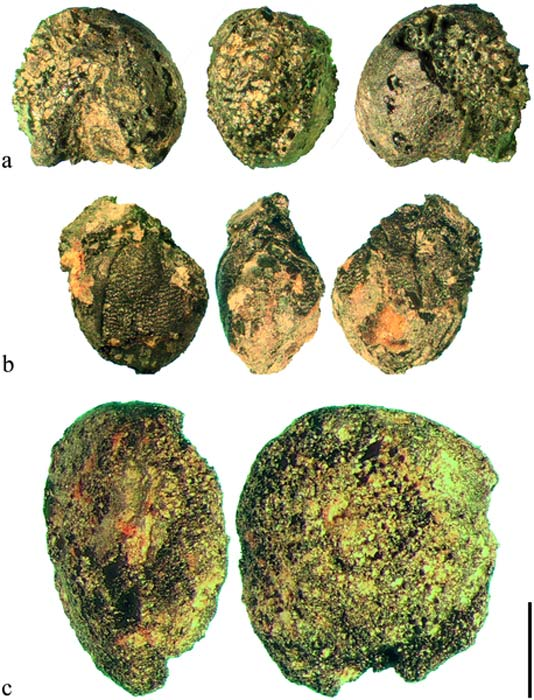 Millet grains (top rows) and lentils (bottom) are among the Bronze Age food remnants found at the prehistoric mining site in the Austrian Alps. (A. G. Heiss et al. / PLOS ONE)