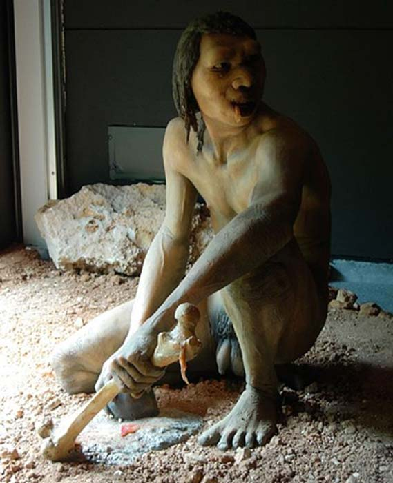 Model of a male Homo antecessor of Atapuerca mountains possibly practicing cannibalism. (Ibeas Museum, Burgos, Spain)