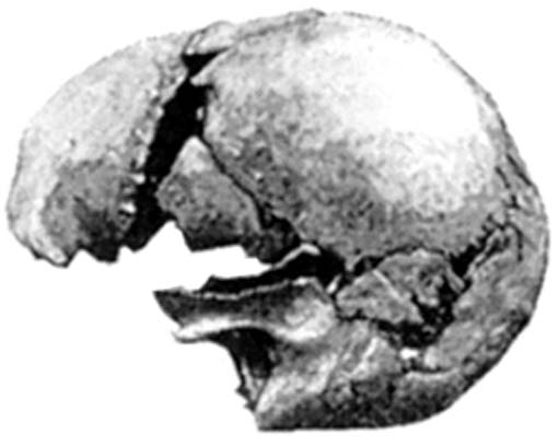 Modern human skull found at Castenedolo, Italy. (Author provided)