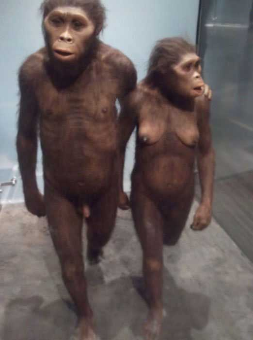 Museum of Natural History - Early Hominids