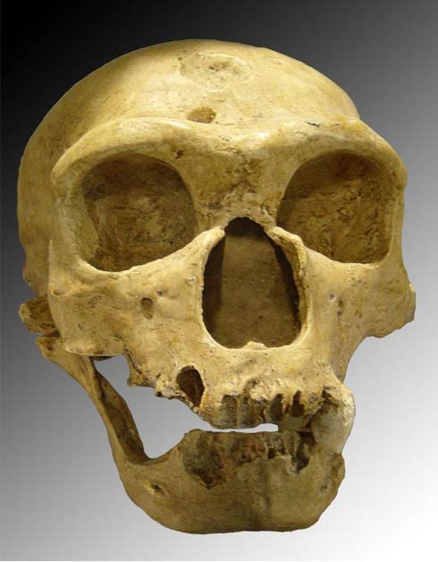 Neanderthal skull discovered in 1908 at La Chapelle-aux-Saints
