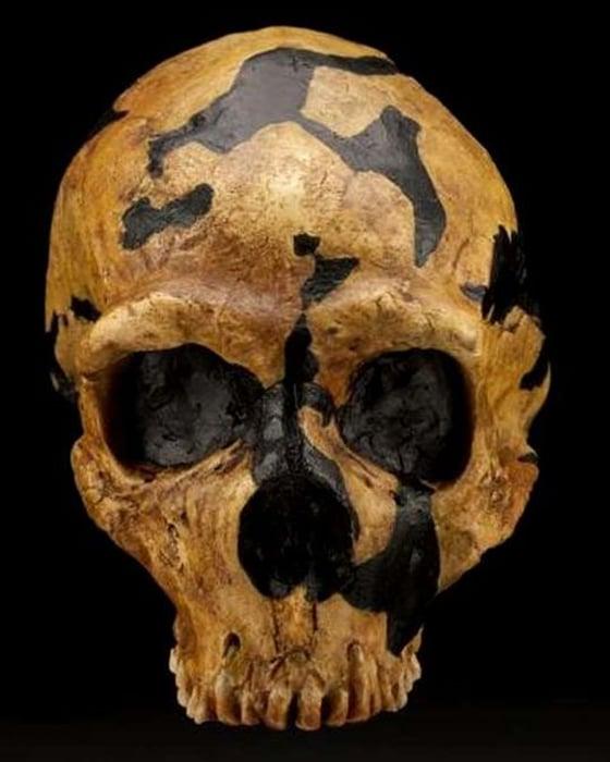 A Neanderthal skull found inside Shanidar.
