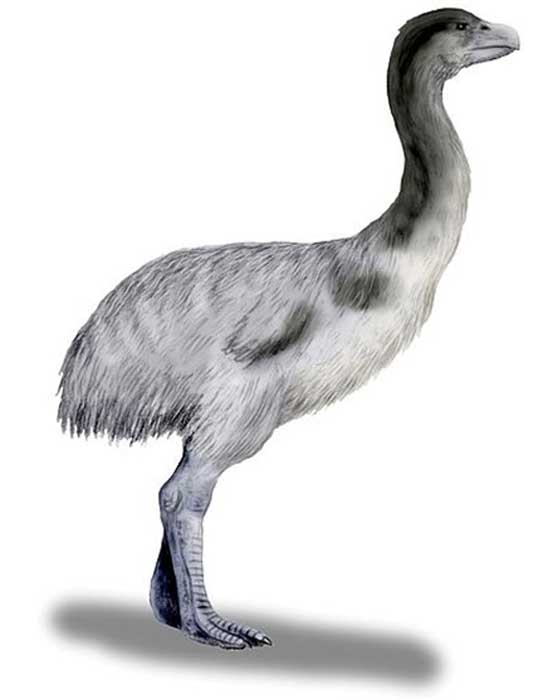 Pencil drawing of Genyornis newtoni, a thunderbird, a long extinct megafauna, from the Pleistocene of Australia. (ArthurWeasley/ CC BY-SA 3.0)