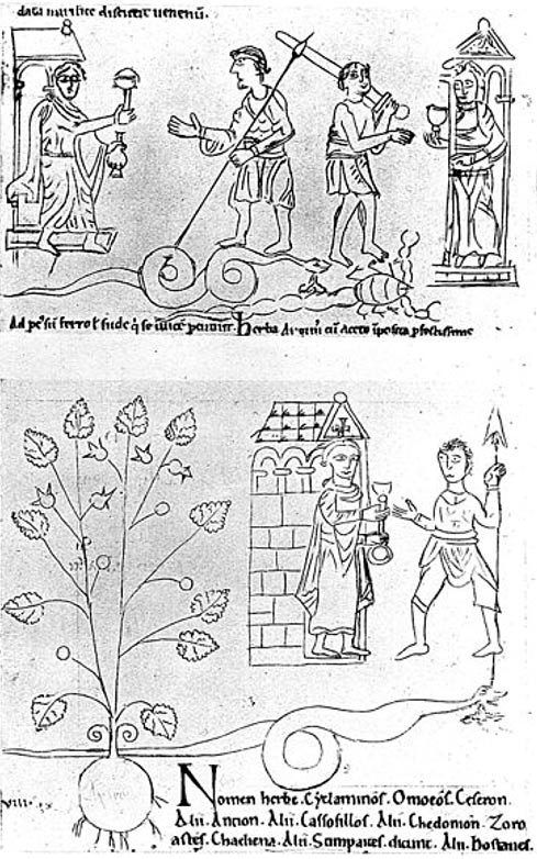 "Top: Physicians offer draughts of agrimony to two warriors to cure sword wounds. Lower portion: Physicians offer a draught of Cyclamine against serpent bite. The herb which forms the ingredient of the draught is at the side of the picture; in it the English scribe has written Arnote i.e. ""Earth-nut""."