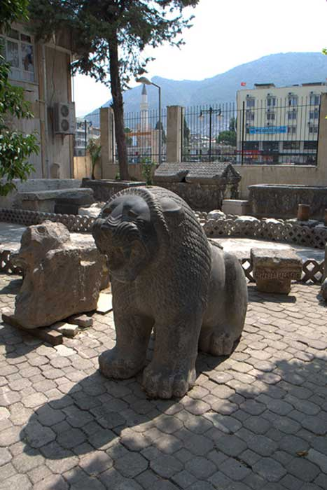 Portal Lion excavated in the 2011 season, seated in the courtyard of the 'old' Hatay Archaeological Museum.