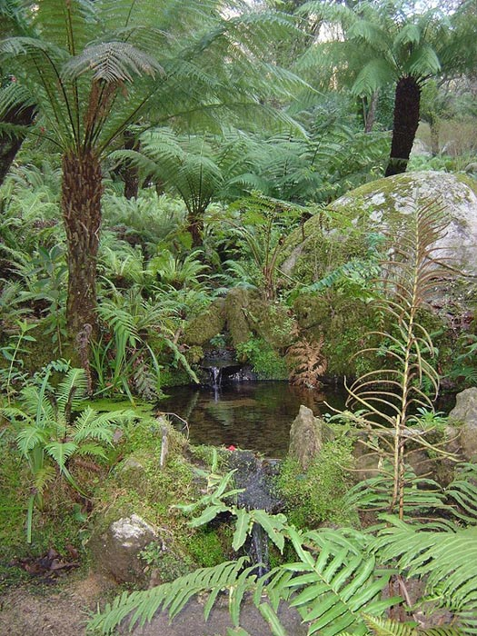 The stream that flows through the Queen's Fern Garden