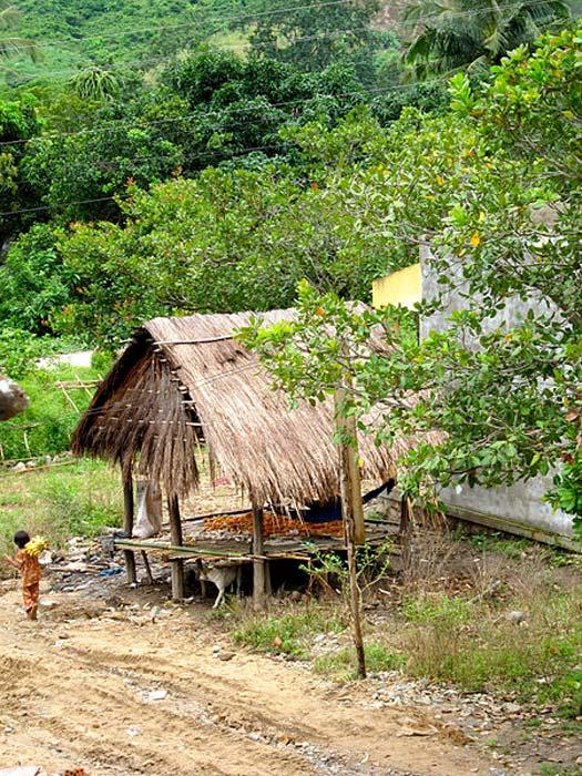 A Raglai collecting bananas in Phuoc Binh National Park, Ninh Thuan Province, Vietnam.