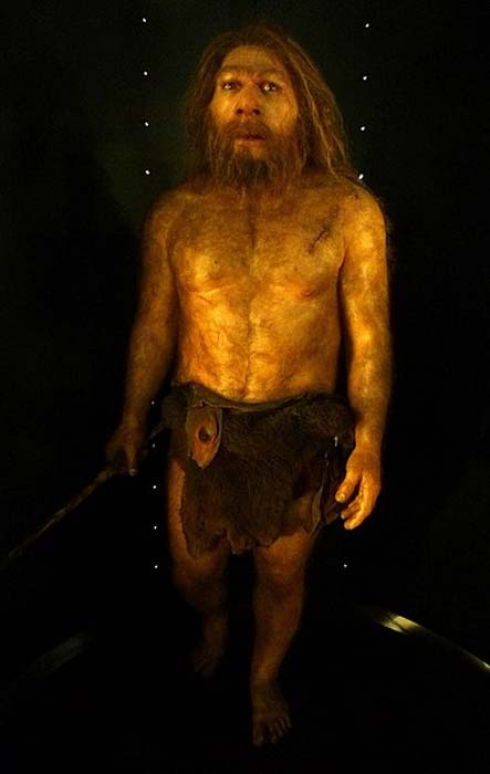 Reconstruction of an adult male Neanderthal, based on the La Chappelle-aux-Saints skull, dated c. 50,000 years ago, by E. Daynes (2010), Museo de la Evolución Humana, Burgos. (CC BY SA 4.0)