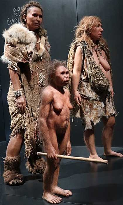 Reconstruction of an adult female H. floresiensis (front, center) shown alongside reconstructions of H. sapiens (left) and H. neanderthalensis (right). (Ismoon/CC BY SA 4.0)