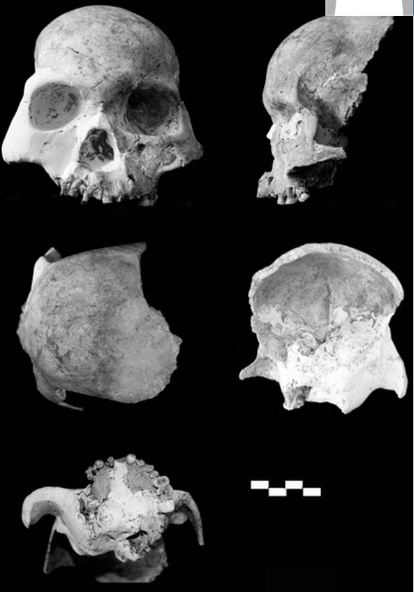Red Deer Cave people, skull and reconstruction.